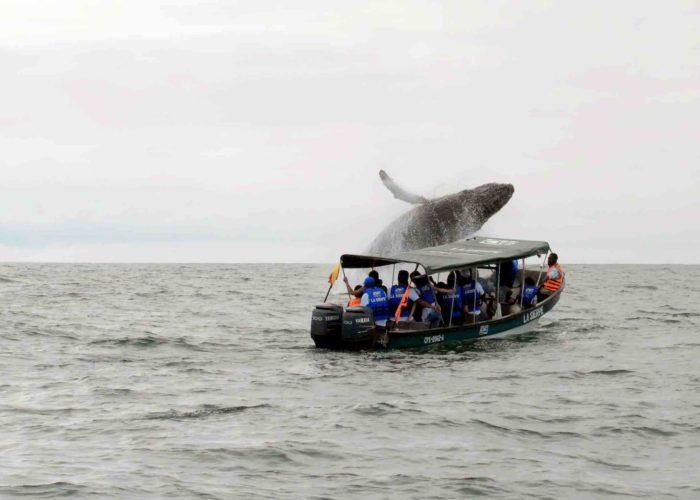 Avistamiento de Ballenas Nuquí