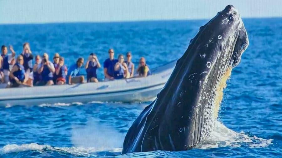 Avistamiento de Ballenas