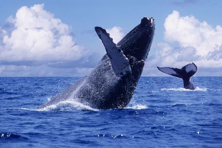Ballenas Nuquí