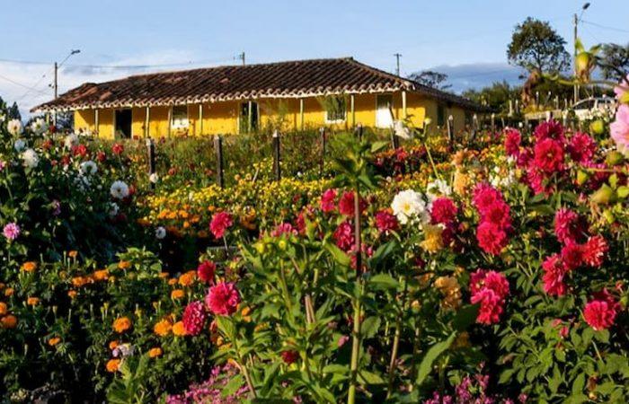 Tour Flores y Guatapé. Turibus (IP)